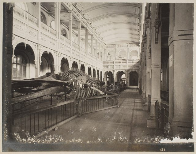 Interior Museo Historia Natural