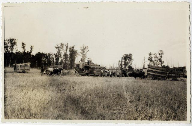 Transporte de paja en un campo