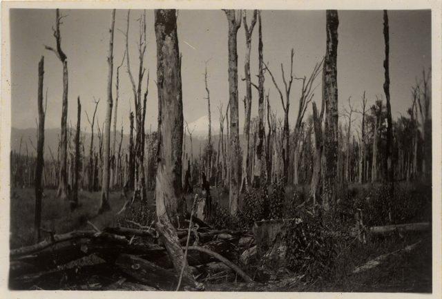 Bosque de troncos desnudos.