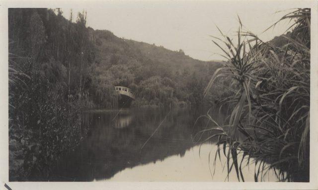 Laguna y vegetación